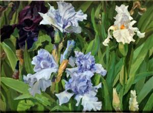 Störtenbecker blaue Lilien